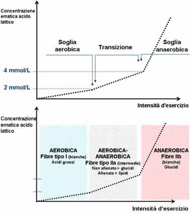 grafico soglia anaerobica